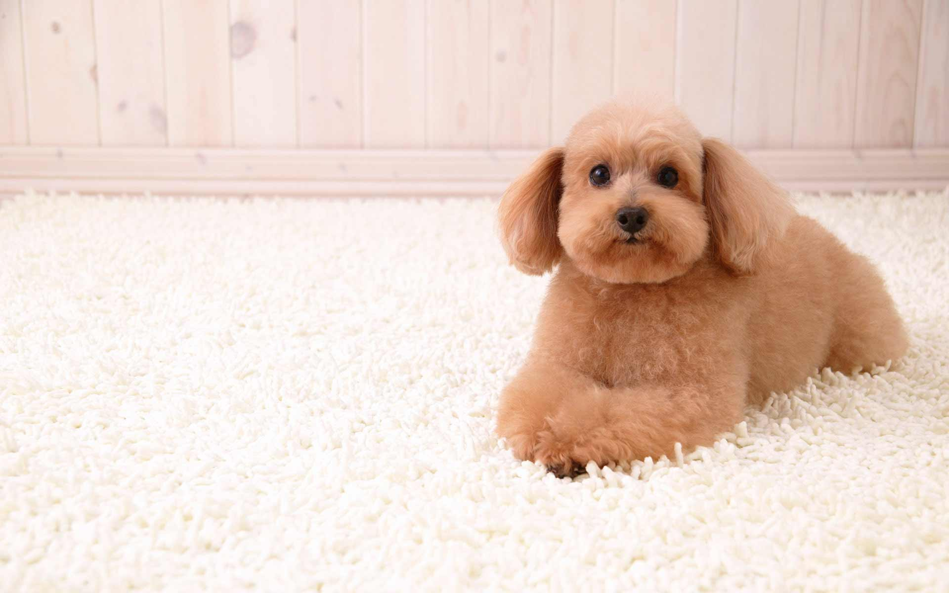 best carpet for puppy dogs