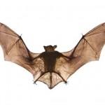Bat Exterminators