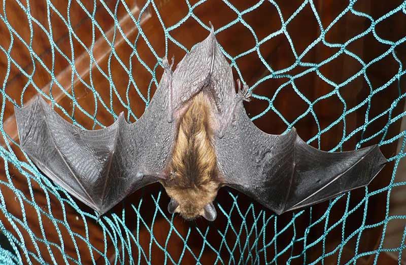 BatPro Pest Control